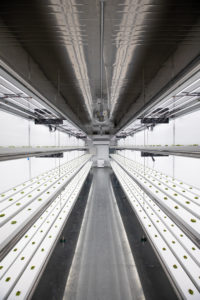 Vertical Farm System Used to Create A Pesticide Free Growing System