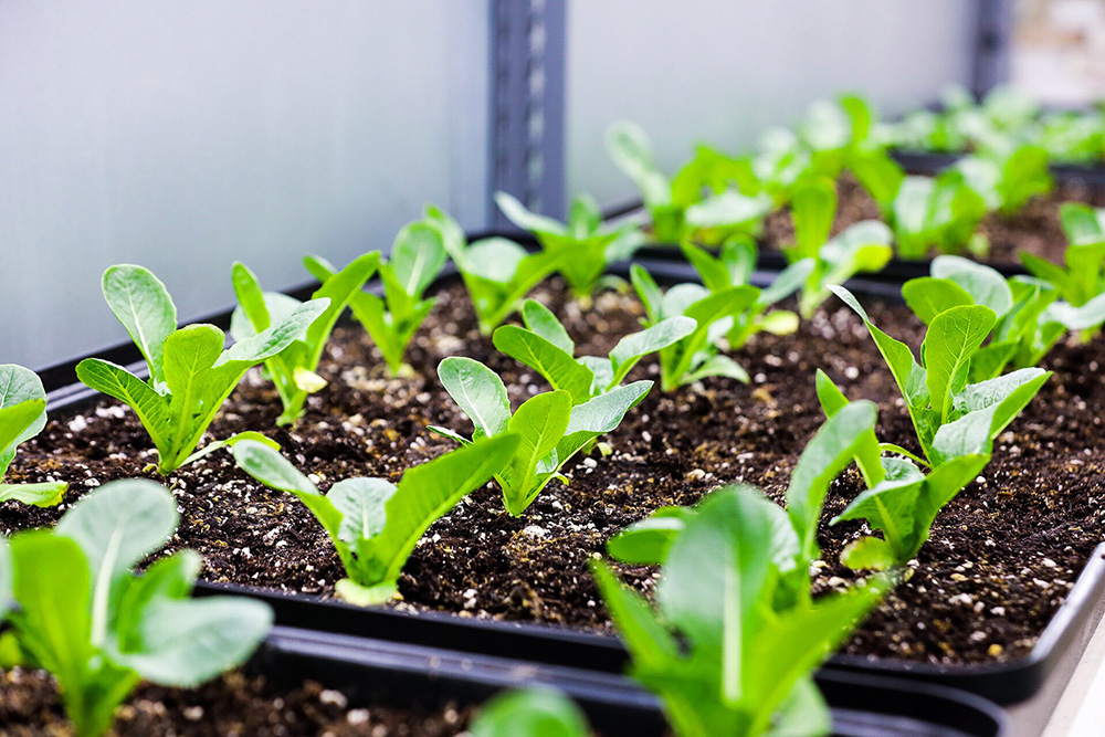 Advanced Container Farming for Greenhouse
