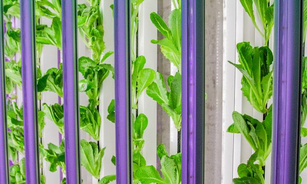 indoor shipping container farm