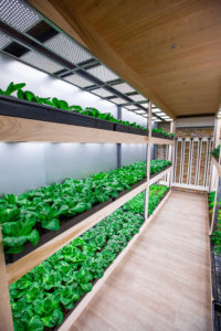 Growing Container Through Hydroponics Growing System