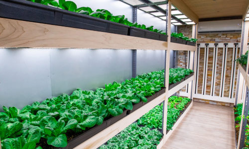 Container Farms for Urban Farming