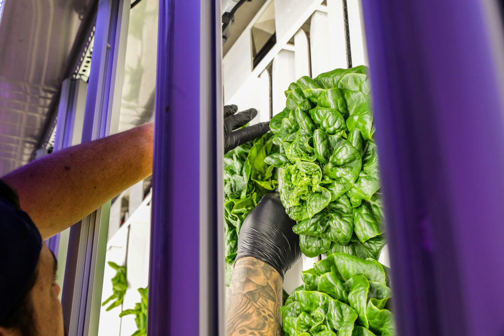 Farms of the Future: Indoor Farming