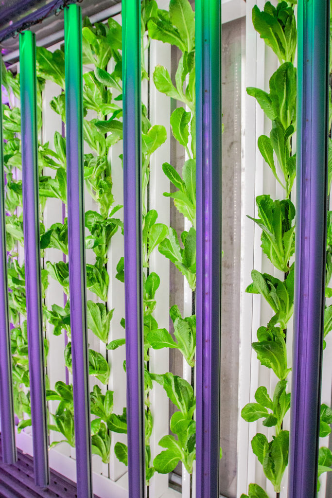 Vertical Farming Grows in Shippign Containers