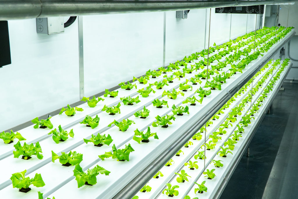 Farming Indoors - New Technology in Shipping Containers