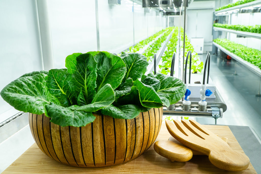 Farming Indoors Through Vertical and Container Farms