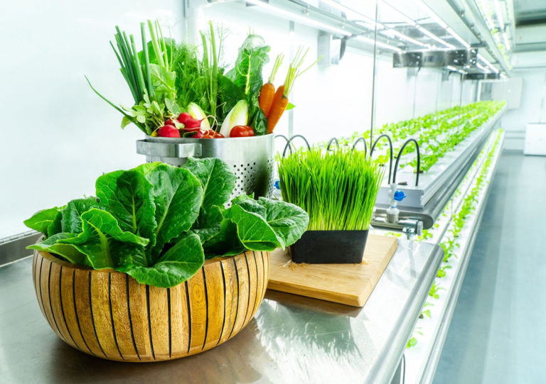 Organic Farms with Hydroponic and Vertical Farming System