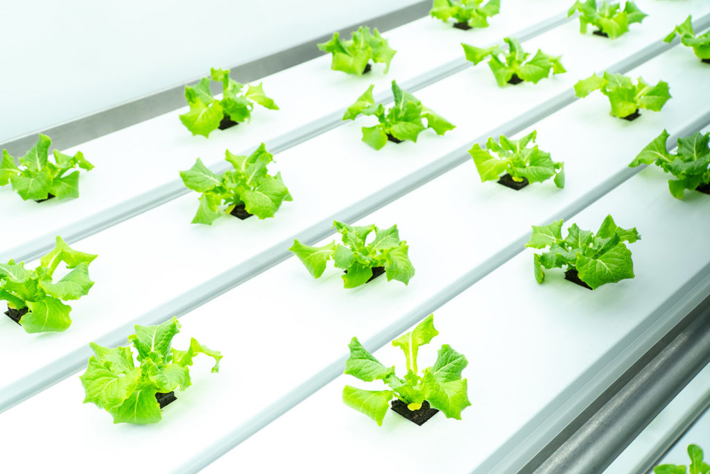 Vertical Farming Revolutionizing the Agriculture