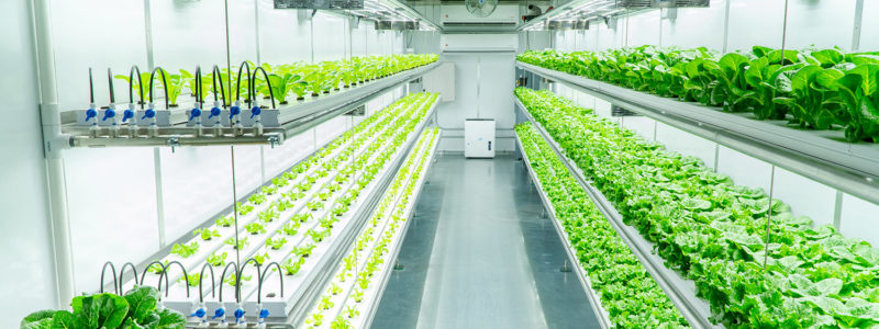 Vertical Farming - A Solution to World Food Crisis