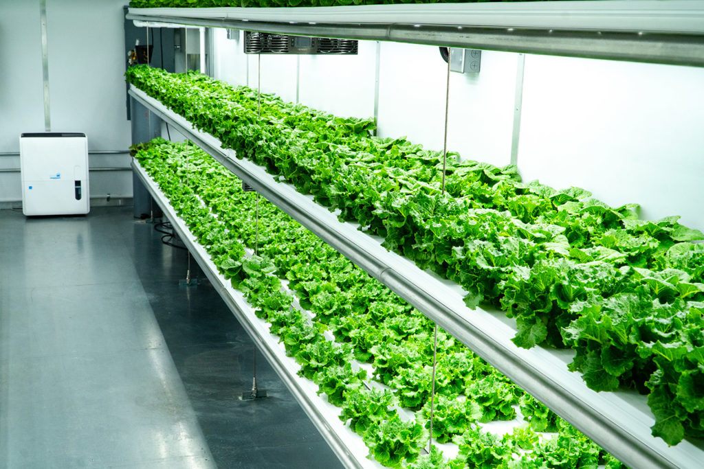 Vertical Farming Upgrading the Agriculture Technology